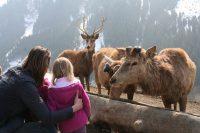 Futt Wildpark Aurach