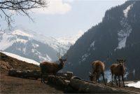 Shones Blick Wildpark Aurach